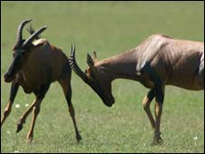 Land-based species, such as African antelopes, have fallen by 25 percent