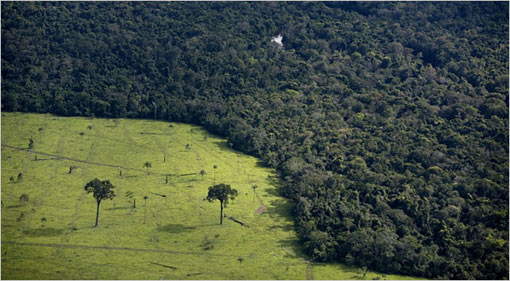 A devastated area of forest used for cattle in March in Brazil. A government plan introduced targets for reducing deforestation and carbon dioxide emissions