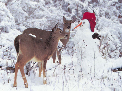 Christmas at North Pole: what's the thought of the dear deer in front of the chubby and jolly Frosty?