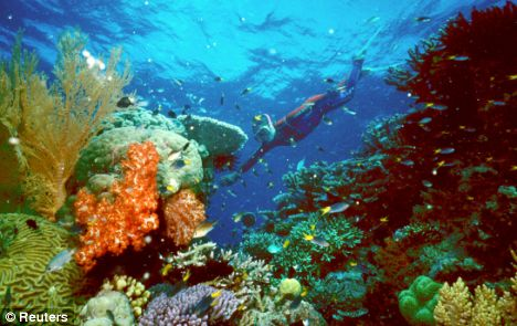 Coral reefs are home to around two million species