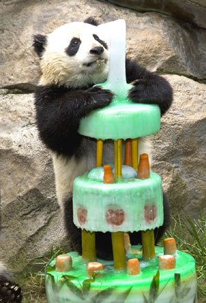 Panda Zhen Zhen turns one