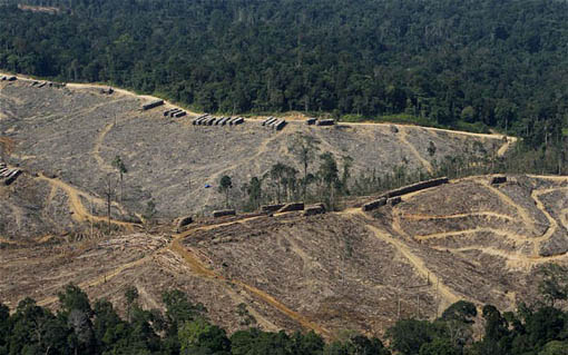WWF said studies suggest the new legislation could see 175 million acres of forest cleared or not restored following illegal deforestation