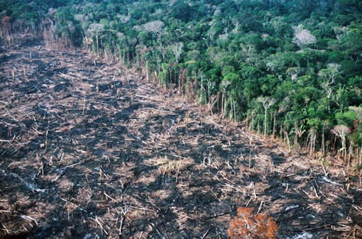 September 1988, Rondonia State, Brazil: Newly cleared land. Soya farming is one of the primary drivers of deforestation in the Amazon