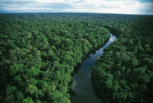 seen from a hill on the northeast edge of the Amazon rainforest, the canopy stretches to the horizon, a sea of green dotted with yellow where trees are in flower