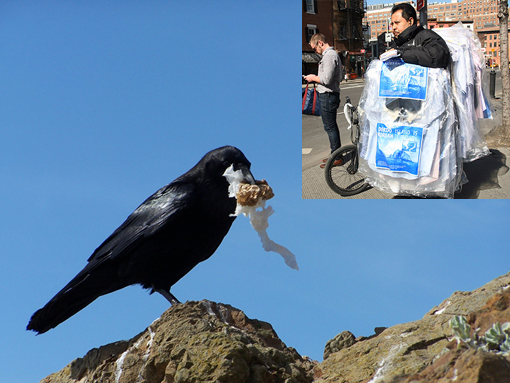 crow eating a plastic bag; inset: New Yorkers carrying home their dry cleaning draped in plastic bags