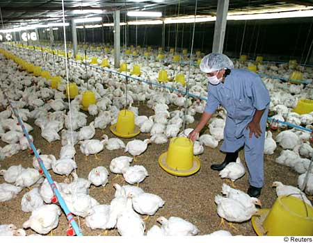 Bird flu: Indonesia's total death toll rises to 119