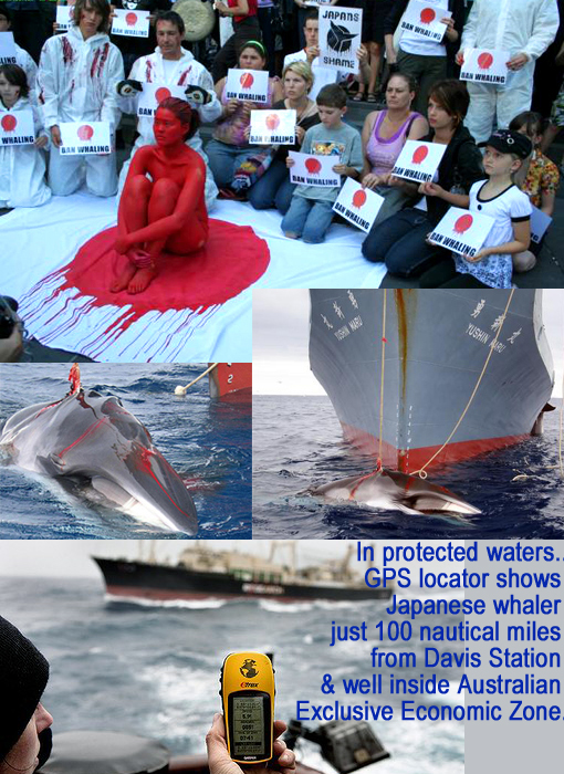 Top: people gathered outside the Japanese consulate in Melbourne to protest against Japanese whaling fleet slaughtering whales in Southern Ocean. Middle: minke whale harpooned by Japanese whaling ship Yushin Maru. Bottom: In protected waters..GPS locator shows Japanese whaler just 100 nautical miles from Davis Station & well inside Australian Exclusive Economic Zone.