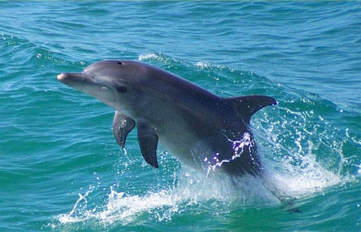 Dolphin Discovery Center: opened in 1994, it's the first Center in Australia dedicated entirely to dolphin research. The Center is located in Bunbury.