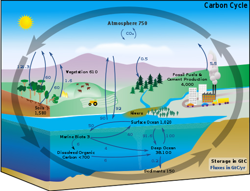 This carbon cycle diagram shows the storage and annual exchange of carbon between the atmosphere, hydrosphere and geosphere in gigatons - or billions of tons - of Carbon (GtC). Burning fossil fuels by people adds about 5.5 GtC of carbon per year into the atmosphere.