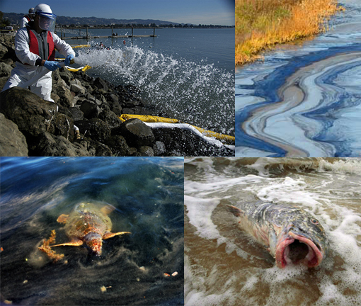 Top L: Gulf Oil Spill - do chemical dispersants pose their own environmental risk?