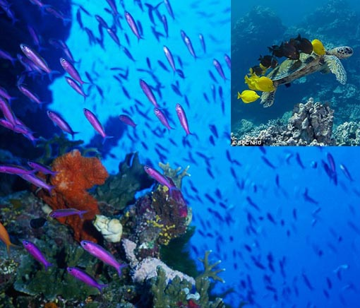 Teeming with life: Australian Government plans to create world's biggest marine reserve in the Coral Sea