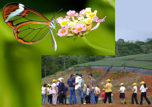 Top: a Clearwing butterfly feeding. Sometimes known as a Glasswing; Bottom: Tree-planting at ECOPIÑAS del Arenal in Costa Rica