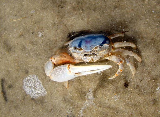 Crab in Cape Cod, Massachusetts. Photograph: deel34/The Wilderness Society