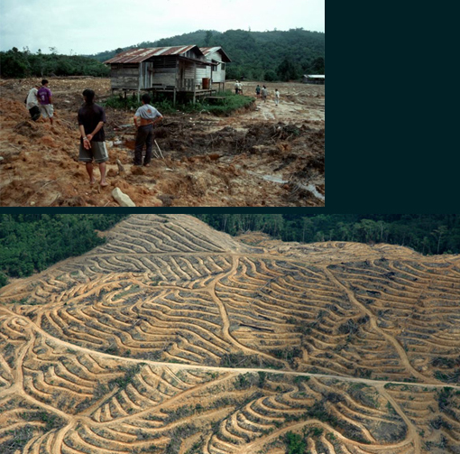 deforestation by logging company & palm oil plantation