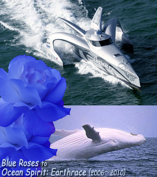Blue Roses to Ocean Spirit. Top image: Earthrace ploughing through Tampa Bay in Florida. Bottom image: White fella - Migaloo is one of a kind, and he may never breed. His iconic status has led the Queensland Government to declare him a 'special interest whale', banning anyone from getting closer than 500 metres from him. Yet Japanese whalers refuse to promise not to kill him in their hunt.