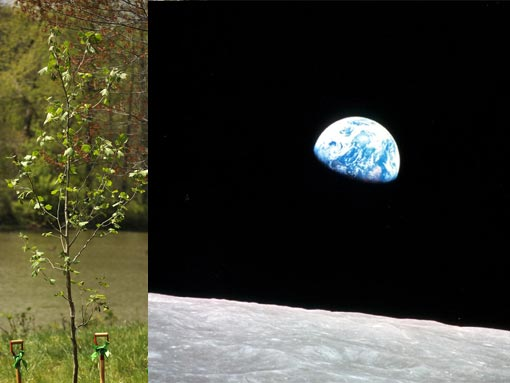 Left: A second generation Sycamore 'moon' tree was newly planted in celebration of Earth Day 2009 & the 40th Anniversary of the first Apollo moon landing at the National Arboretum. Right: Earthrise, as seen by the Apollo 8 crew