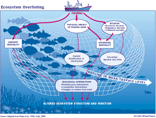 graph illustrating overfishing; habitat destruction, bycatch, incidental mortality