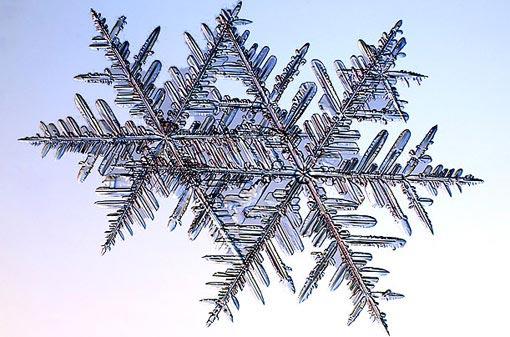science of snowflakes: fernlike stellar dendrites
