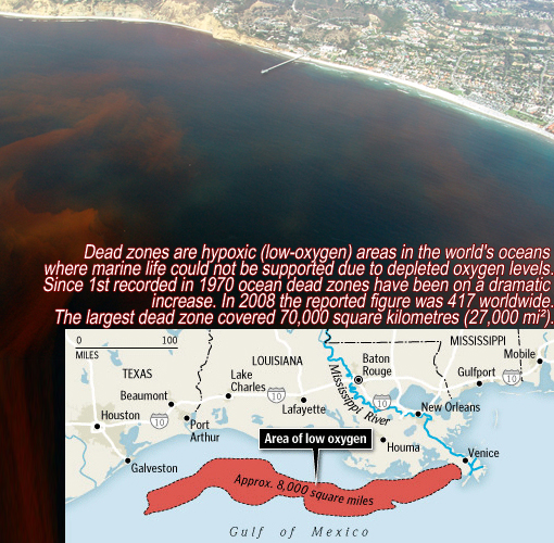 largest ocean deadzone in Gulf of Mexico from Mississippi River delta