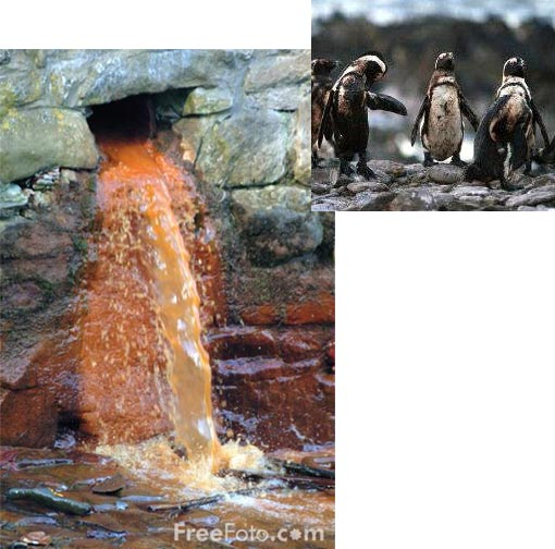 oil-covered penguins; industrial pollution