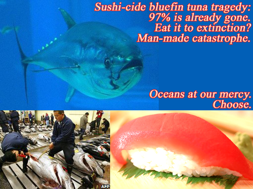 Sushi-cide blue fin tuna tragedy: 97% already gone. Eat it to extinction? Man-made catastrophe. Oceans at our mercy. Choose.