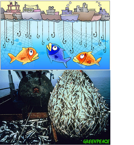 overfishing in the Mediterranean Sea has led to the targetting of smaller and smaller fish