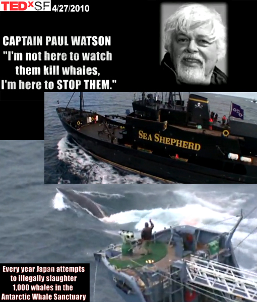 Captain Paul Watson: 'I'm not here to watch them kill whales, I'm here to STOP them.'