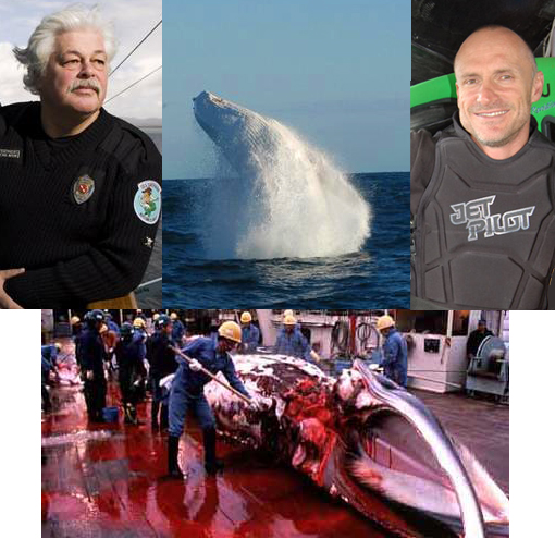 Inset: [Left] Captain Paul Watson, Sea Shepherd leader. [Right] Pete Bethune, skipper of Earthrace (Ady Gil). [Center] Endangered white whale, migaloo. Bottom: Japanese fisherman butchering captured whale