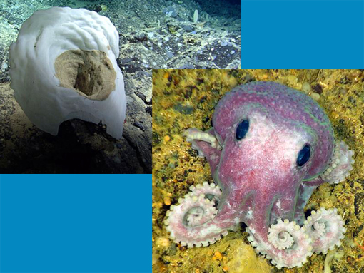 new species discovered during a deep-sea expedition off Canada's Atlantic coast