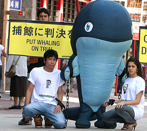 'Japan should put whaling on trial', not those trying to draw attention to it