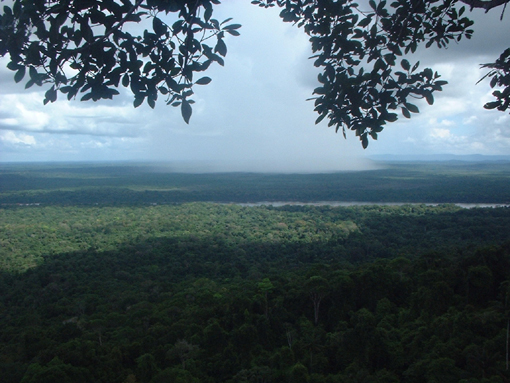 View from Turtle Mountain Iwokrama Rainforest Reserve, Guyana