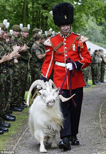 guard of honour: The retiring goat, wearing full ceremonial dress, is led out for the last time by handler Lance Corporal Ryan Arthur