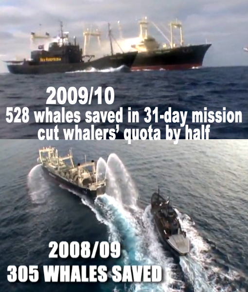 Whale Wars 2010: Sea Shepherd cut Japanese whalers' quota in half, whalers cut Earthrace/Ady Gil in half and jailed Skipper Peter Bethune