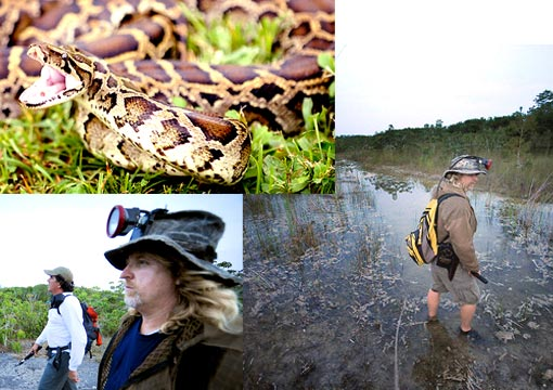 Hunting Python Snakes in Florida