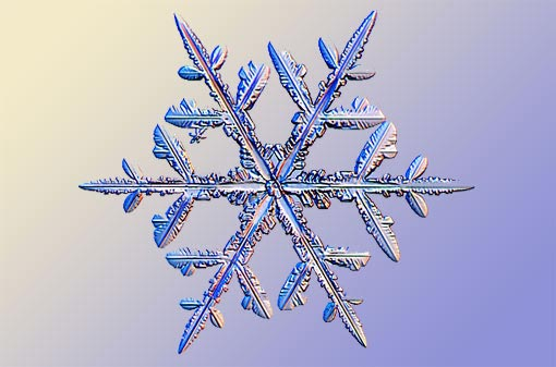 science of snowflakes: stellar dendrites