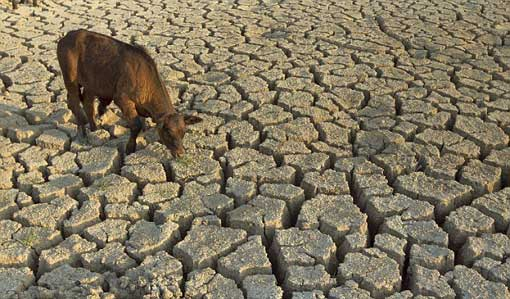 extreme heat and drought in TX, summer 2011