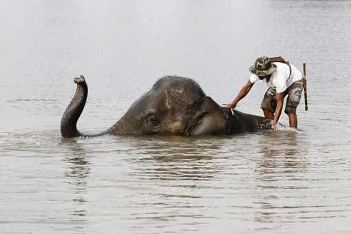 A mahout - or elephant keeper - stands on an elephant in Thailand's flooded Ayutthaya Province on October 13.