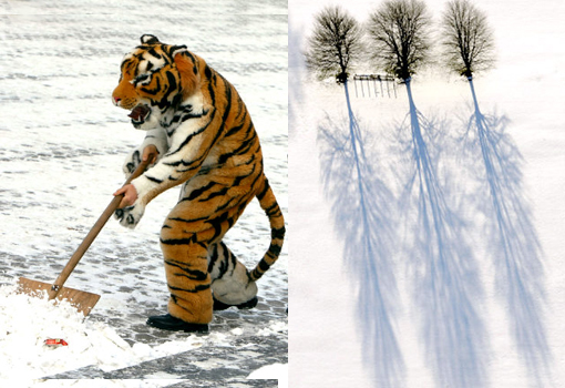 Left: An assistant of street photographer dressed as a tiger, chinese calender sign for 2010, helps a council worker to clean to clear snow. Right: Three trees cast their shadows across the snow covered fields.