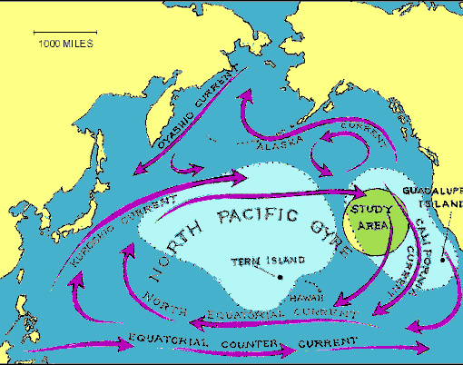 The great Pacific Garbage Patch is not merely a patch however, it's the size of a continent, and it's filling up at a ratio of six pounds of plastic for every pound of plankton and this is not good for animal life. Thousands of birds die as they mistake plastic for food and ingest it, jellyfish get tangled in frayed line and become strange underwater apparitions before they too perish, young sea turtles get wrapped by tape and their shells grow distorted like a waist drawn in by a belt, seals dive for fish through nets that end up around their neck and slowly strangle them.