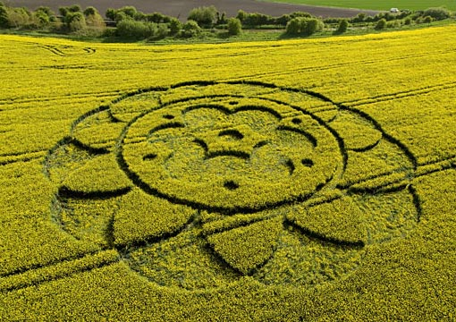 A crop circle in a field of oilseed rape at All Cannings, Wiltshire created 6 May. The circles can take the shape of DNA structures, scorpions, snowflakes, helices, webs, knots and complex geometric patterns.