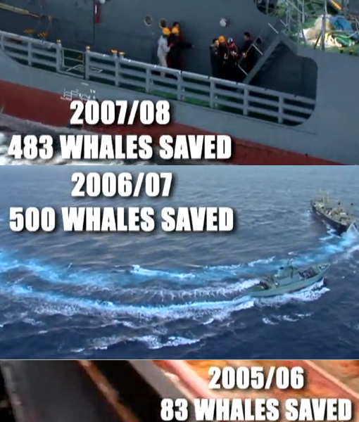 Whale Wars: war to save whales from slaughter
