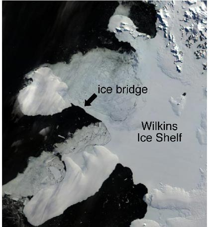 the Wilkins Ice Shelf has been cracking in new places recently and images released by the European Space Agency show that it will probably very soon break off entirely. A 62 square mile piece broke off in May 2008