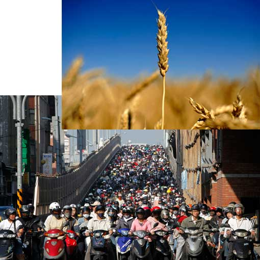 Top: cereal grain stalk near Lethbridge, Alberta, Canada; bottom: rush hour in Taipei in 2009 - Taiwan's capital is notorious for its traffic jams, even though many motorists choose motorcycles and scooters over cars.