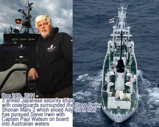 3 armed Japanese security ships with coastguards surrounded the Steve Irwin; Shonan Maru 2 which sliced Ady Gil in half has pursued Steve Irwin with Captain Paul Watson on board into Australian waters