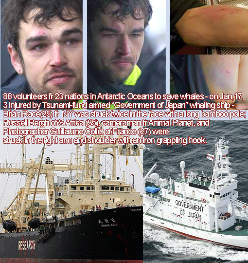 88 Sea Shepherd volunteers fr 23 nations in Antarctic Oceans to save whales; Jan17, 2012: 3 injured by Tsunami-fund armed 'Government of Japan' whaling ship