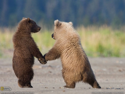 bears hand in hand