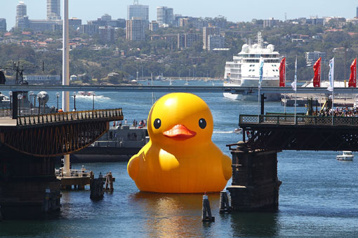 giant Rubber Duck enters Cockle Bay Wharf in Sydney, Australia