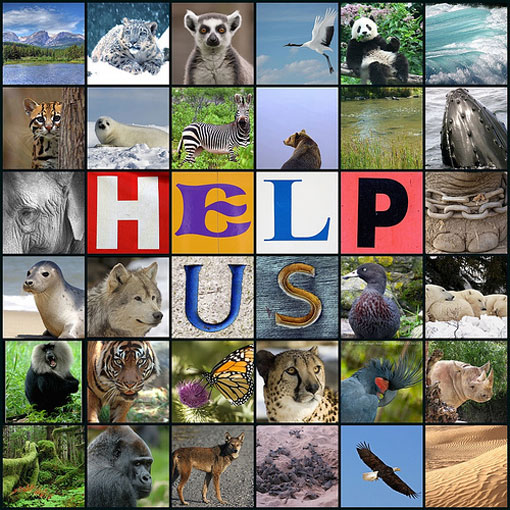 Endangered Species Day, May 2012