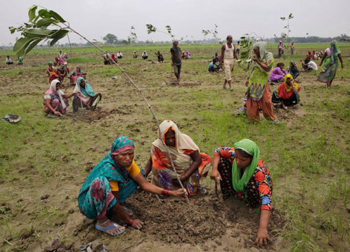 volunteers plant trees in India as part of an effort to restore 50 million trees in a day