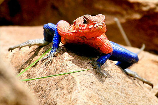 lizard looking like spiderman